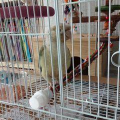 앵무새사랑꾼