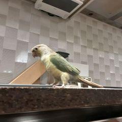 앵무새사랑꾼동생