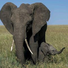 safariphotographer