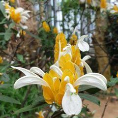노랑새우풀꽃