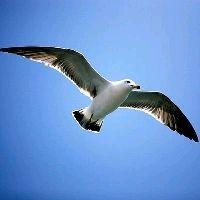 자유로운날개