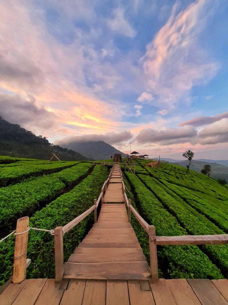 Lokasi tempat wisata kebun teh puncak pass