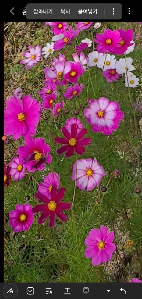 clipboard_image_1604337897016_1604337897016.jpg