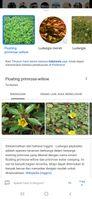 Screenshot_20201126-134429_Google.jpg