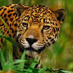 JaguarPlus