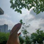 세잎클로버도우기면네잎클로버