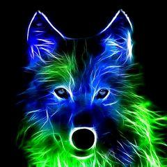 Wolf28
