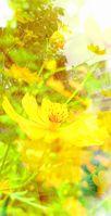 photostudio_1631839480050_22008.jpg