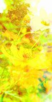 photostudio_1631850630047_22018.jpg