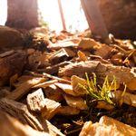 가을의사진첩