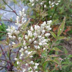 하얀겨울꽃