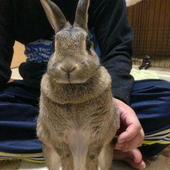 ウサギのミミコ