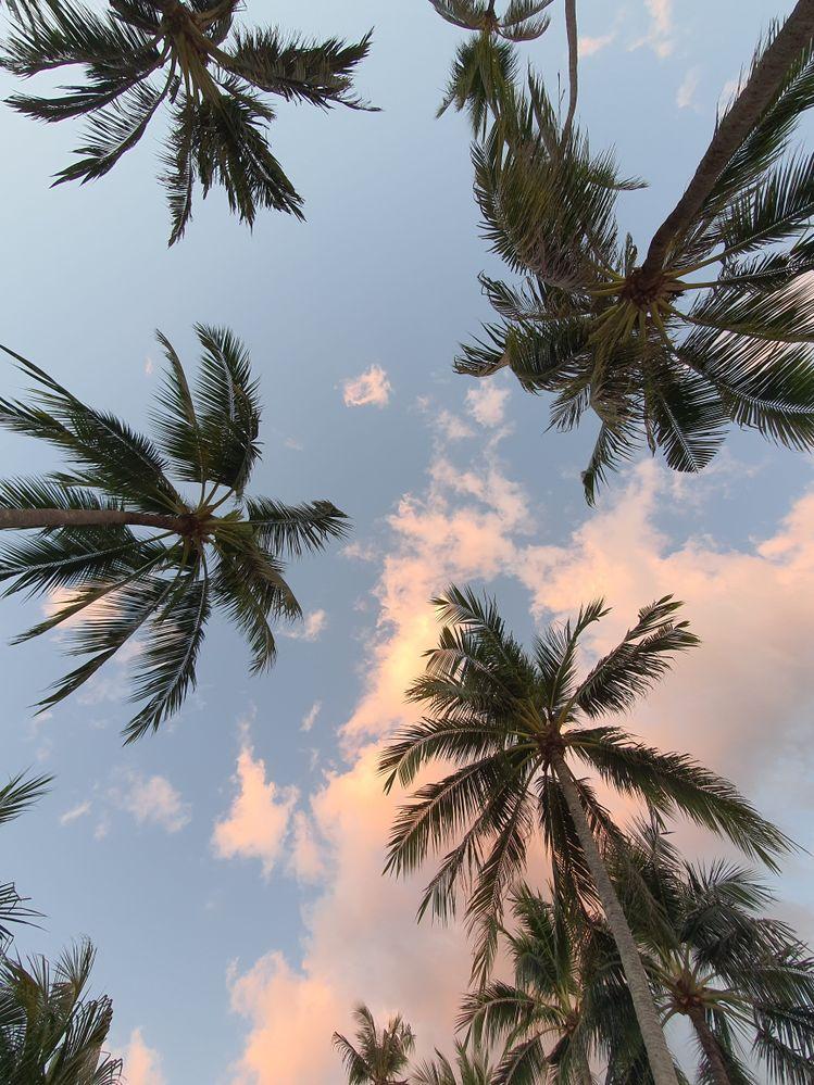 Tree sunset @ Bohol.jpg